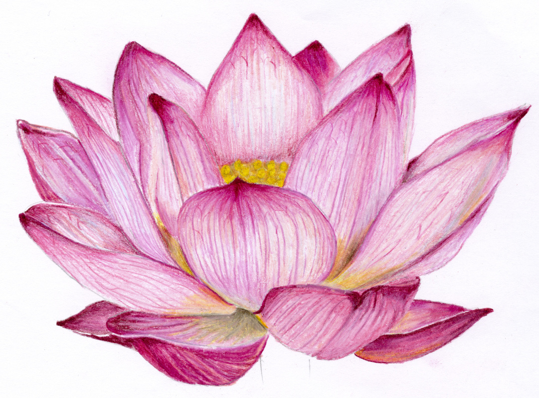 Pin Lotus Flower Pencil Drawing Easy On Pinterest